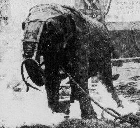 Topsy the elephant, electrocuted by Thomas Alva Edison http://www.thefilmpalace.com/electrocuting_an_elephant.htm