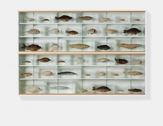 Damien Hirst, Isolated Elements Swimming in the Same Direction for the Purpose of Understanding (Right), 1991
