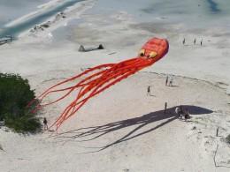 octopuskite