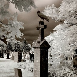 crowtombstone