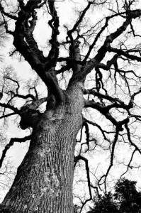 leaflesstree