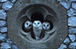 OwlsWindow