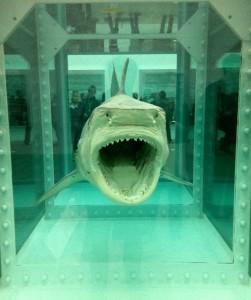 dh_shark1-858x1024