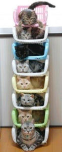 troy-perault-photo-cats-in-stacked-baskets (1)